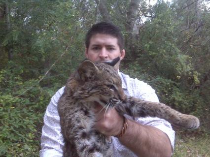 ACO Big Cat