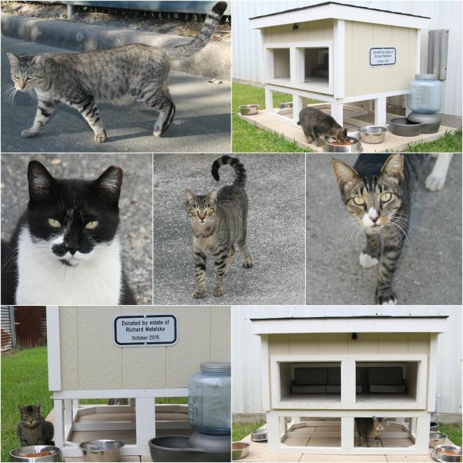 TNR Community Cats